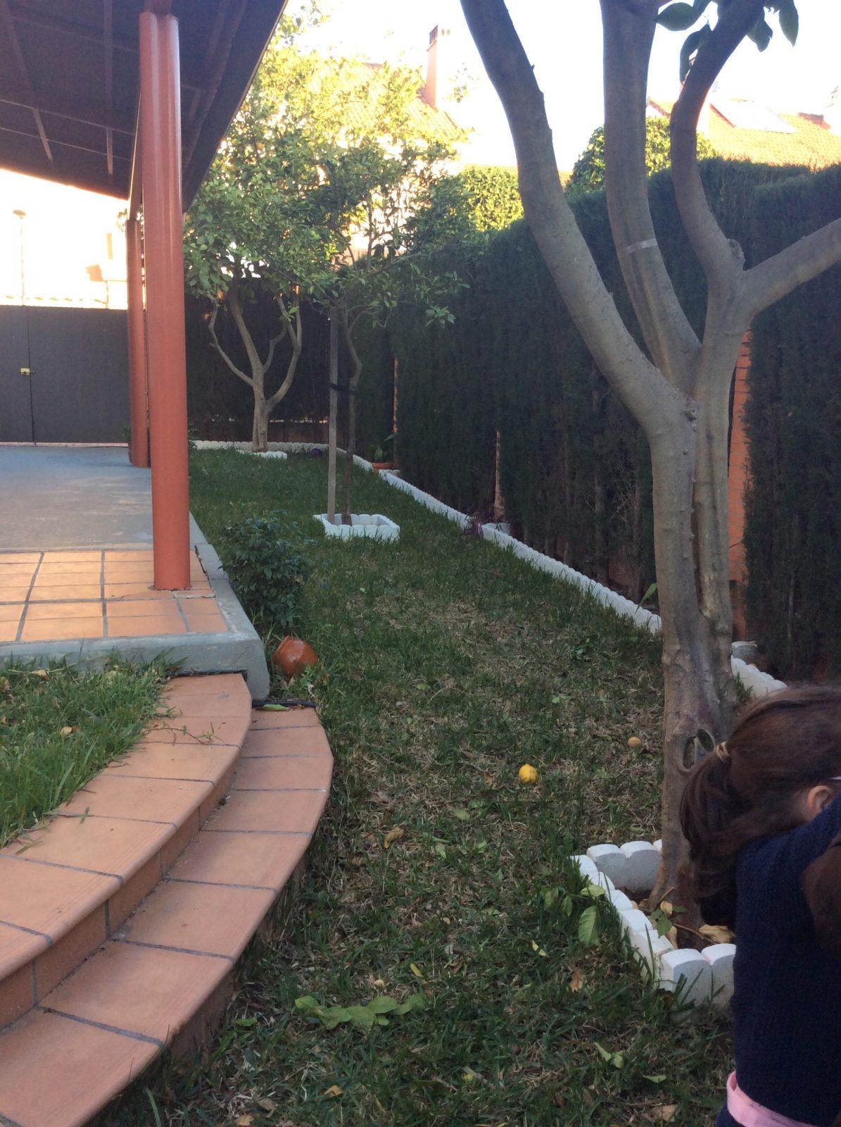 residencial montequinto sevilla antes 03 - Una mirada hacia el jardín | Proyecto de integración de patio en salón y reforma de patio