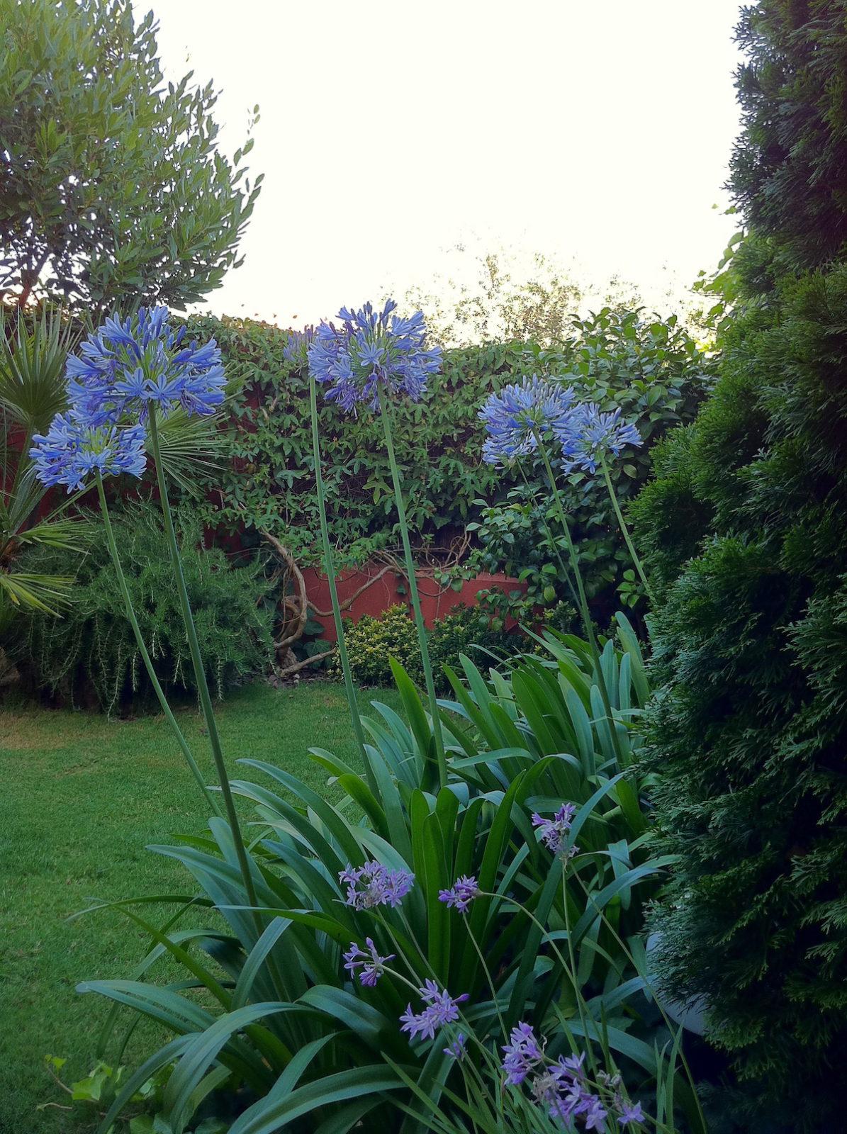 la foto 9 - Terraza jardín, proyecto de ajarinamiento en Tomares.